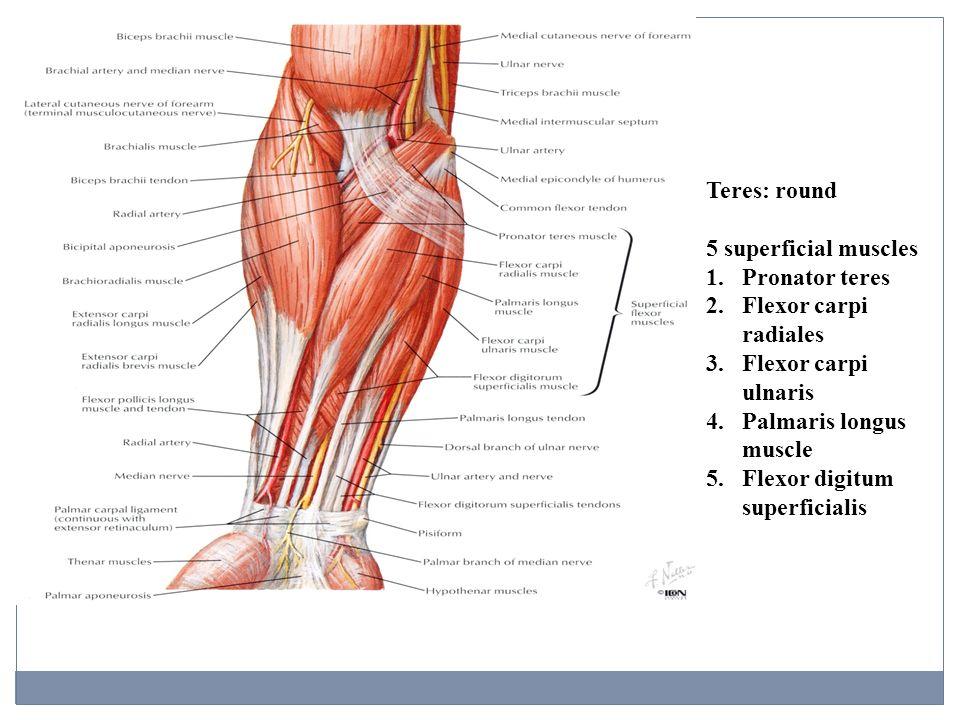 Anatomy : joints! yay!
