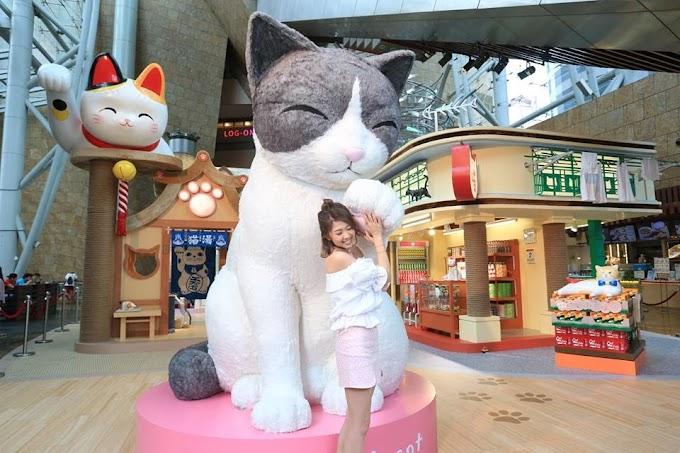 【貓奴必去】朗豪坊化身貓樂園 HappyMEOWment