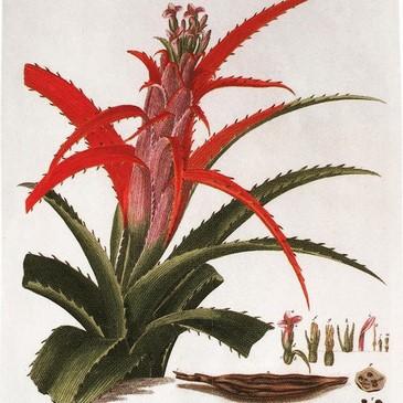 "Calendario Real Jardín Botanico ""Plantae Selectae"""