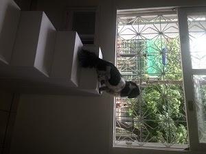 cães olhando a janela