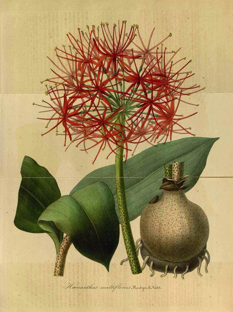v e r d e c h a c o: Bola de fuego / Alfiletero / Flor de