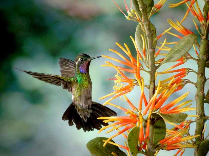 biboca ambiental beija flor ou colibri. Black Bedroom Furniture Sets. Home Design Ideas
