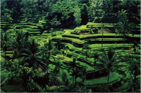 Wisata Alam dan Seni yang Dekat Hanging Gardens Ubud