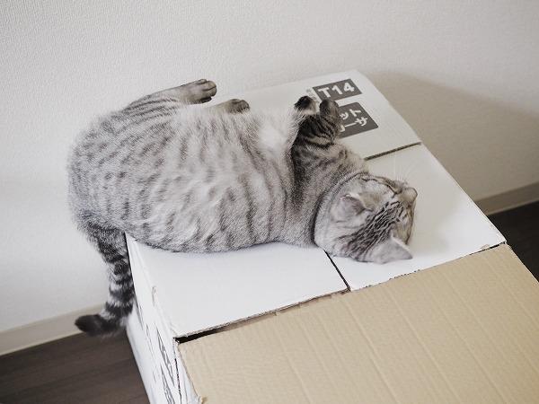 箱の上に寝転がってスリスリ