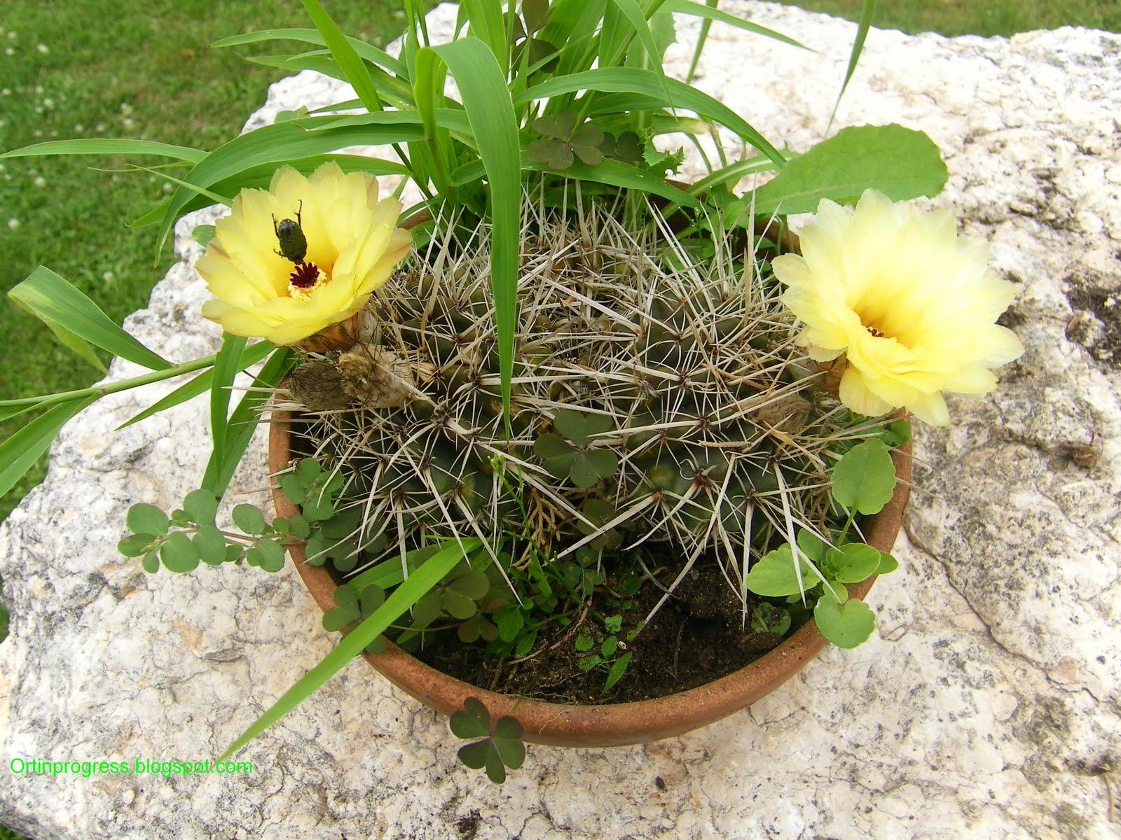 Piante Grasse Da Giardino piante grasse da giardino foto