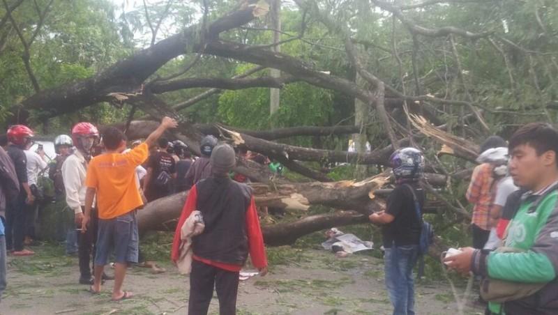 Pohon tumbang dekat UI menewaskan 2 orang