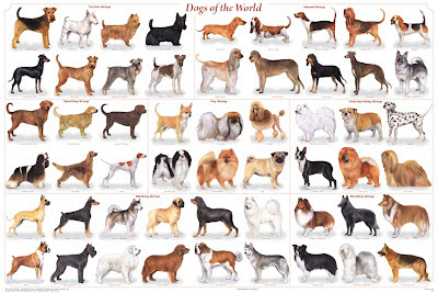 many different breeds and types of dogs there are small dogs big dogs ...