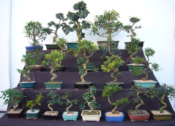 The Term Bonsai Means A Plant In Tray Which Tells Us That Is An Important Aspect Successfully Growing