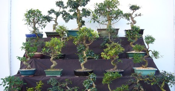 Bonsai Tree Types Bonsai Tree Pots