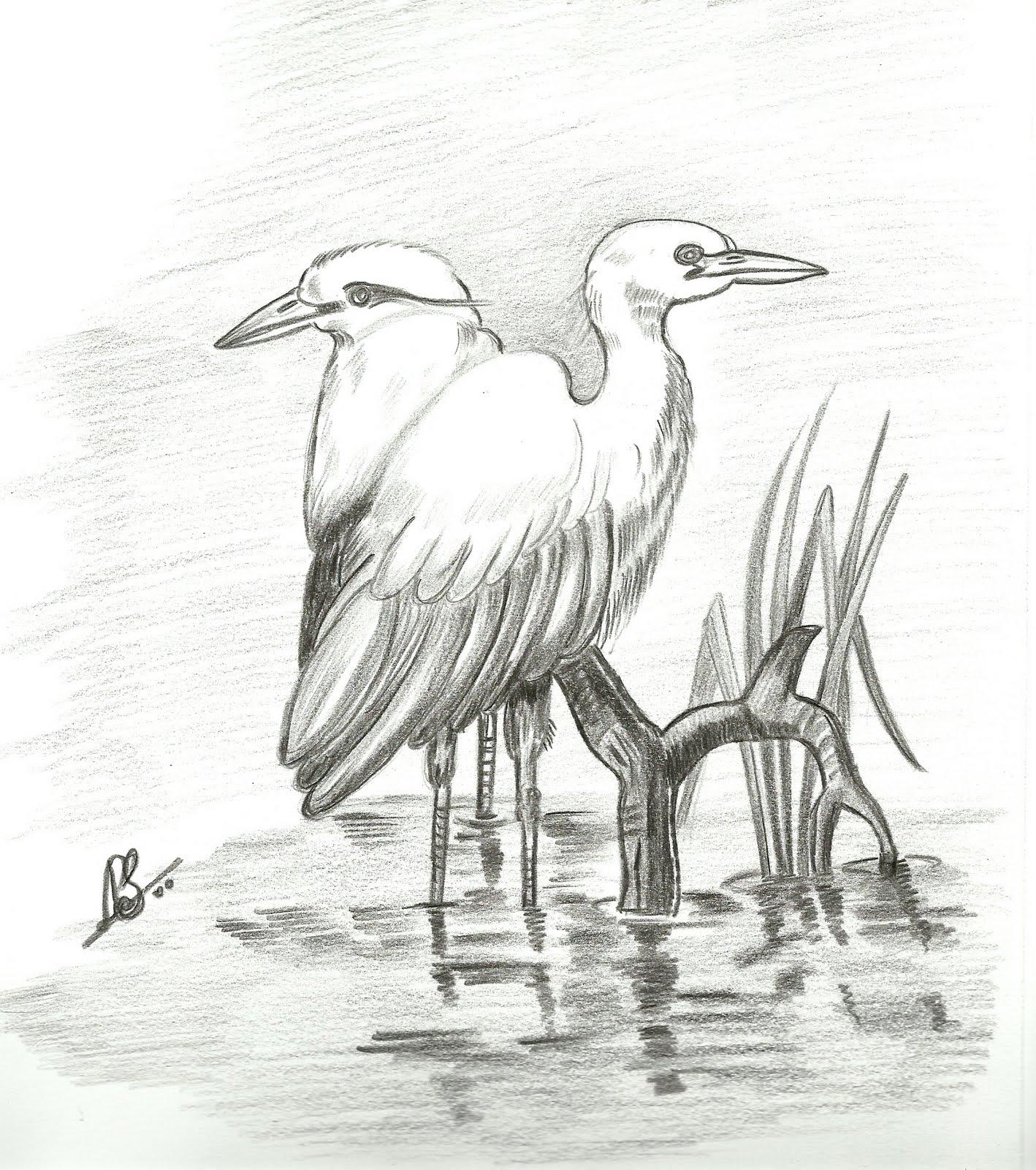 VarnaVismayam.: Few Pencil Drawings of Birds..
