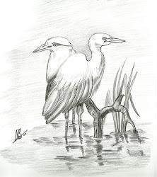 pencil birds drawings bird drawing wings line sketching zoeken which heron