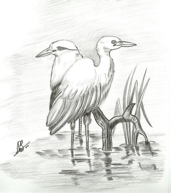 VarnaVismayam.: Few Pencil Drawings Of Birds