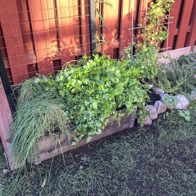 gräslök, persilja, odlingsbox