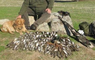 Απόβαση εκατοντάδων Ιταλών κυνηγών, για έναν ακόμη χρόνο, στη Θεσπρωτία για το κυνήγι πουλιών...