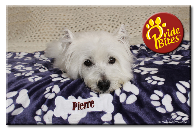 Westie on a personalized PrideBites balnket