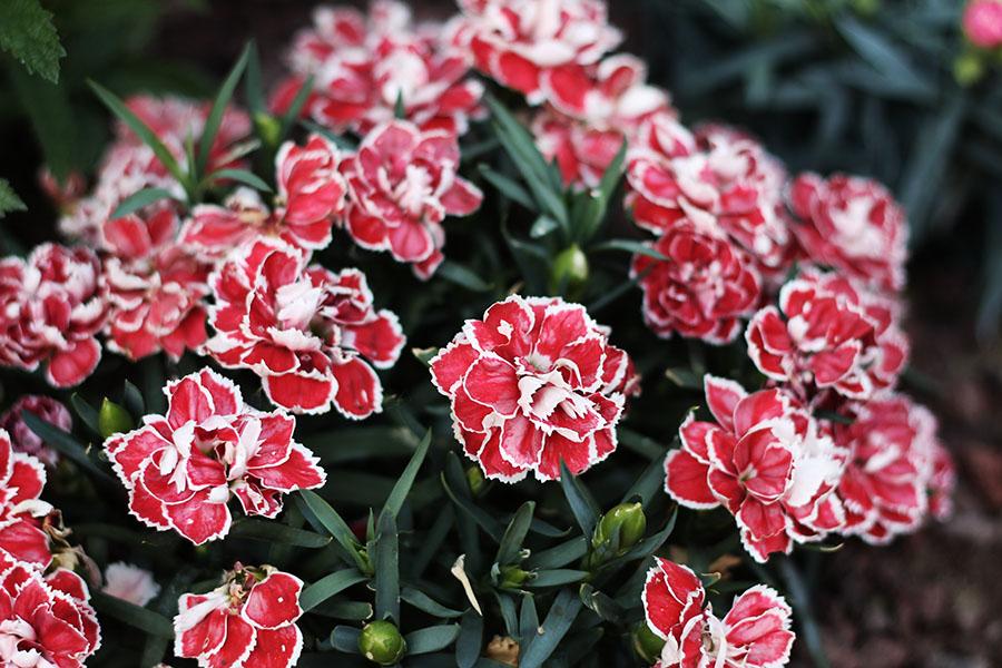 fleurs-arbre-photo