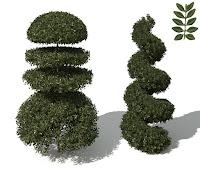 Yuvarlak ve spiral şekil verilmiş şimşir ağaçları ve yaprakları