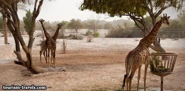 حديقة العرين للحياة البرية ( Al areen wildlife park )
