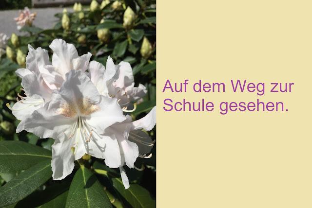 Wunderschöne weisse Blüte