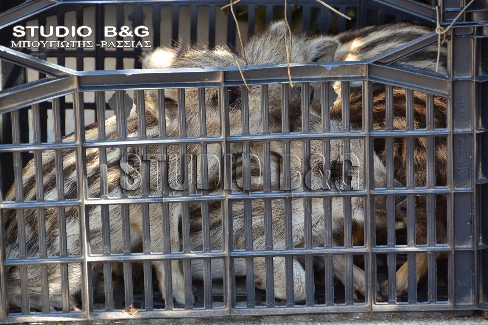γνωριμίες άγριων ζώων δημοφιλής ιστοσελίδα dating Μαλαισίας