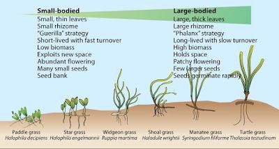Ekosistem Padang Lamun dan Karakteristiknya