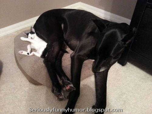 Cat and dog cuddling sleeping next to each other! Super cute!