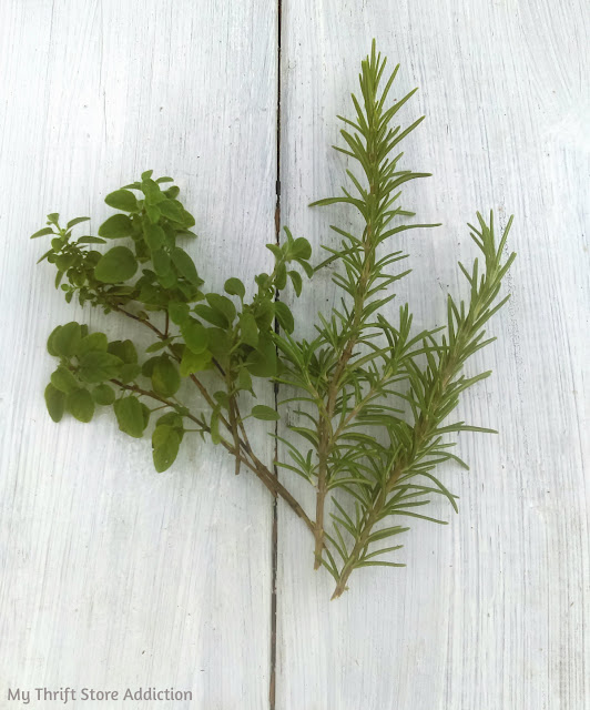 how to root herbs the organic way