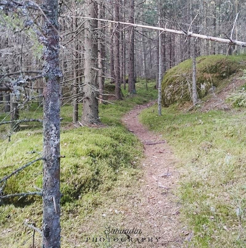 Metsässä mieli lepää