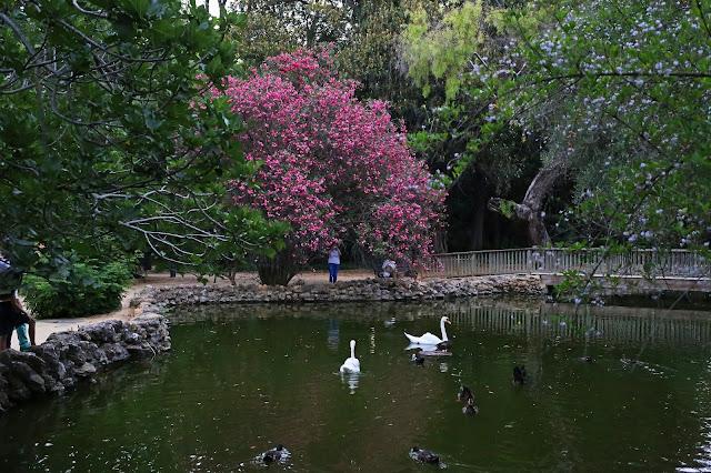 Estanque con ocas y patos de la Isla de los Pájaros