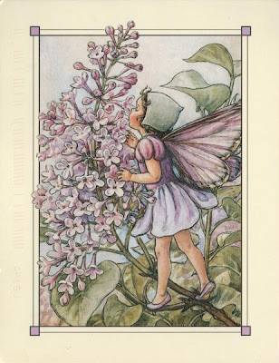 Illustration of a fairy dressed in lilac and a lilac blossom, for a children's book