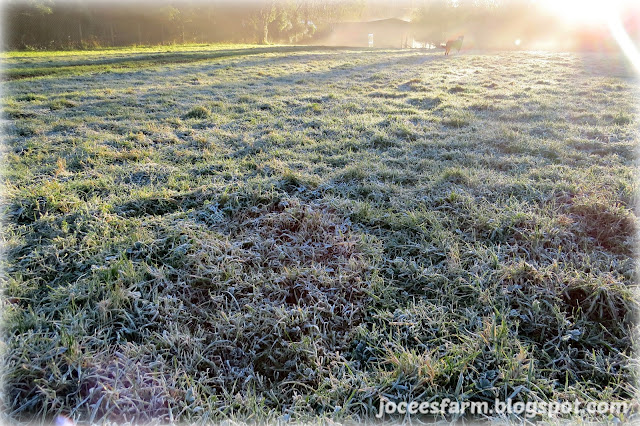 Jocees Farm - Early Winter Morning
