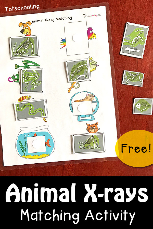 FREE Animal X-rays matching activity with 8 different pets at the vet. Great preschool or kindergarten activity to learn about x-rays, the letter x, pets, community helpers, or a vet office pretend play activity.