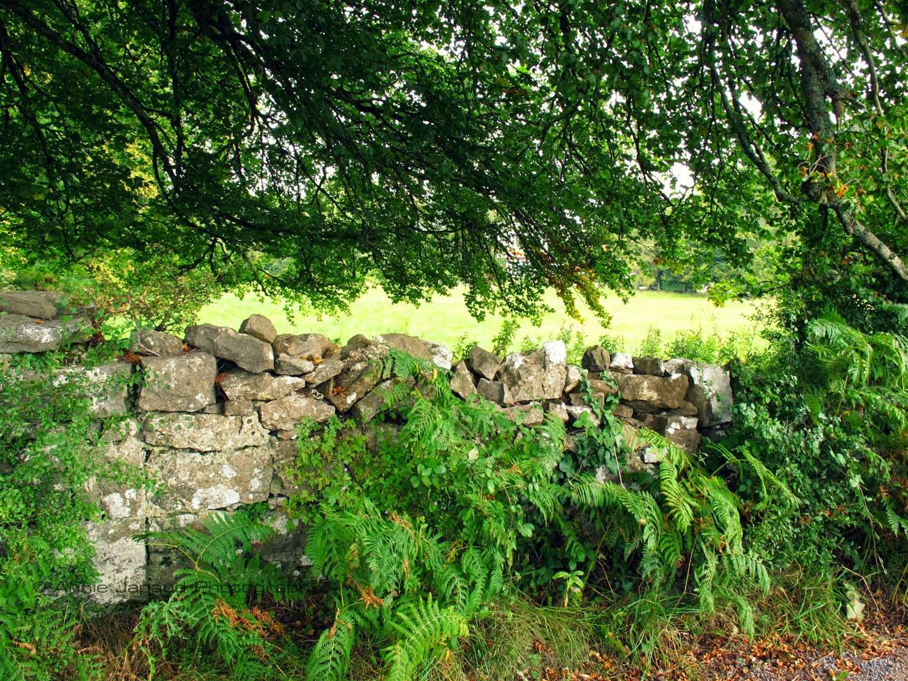 stone wall, green leaves and trees