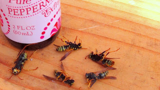 household products to kill wasps