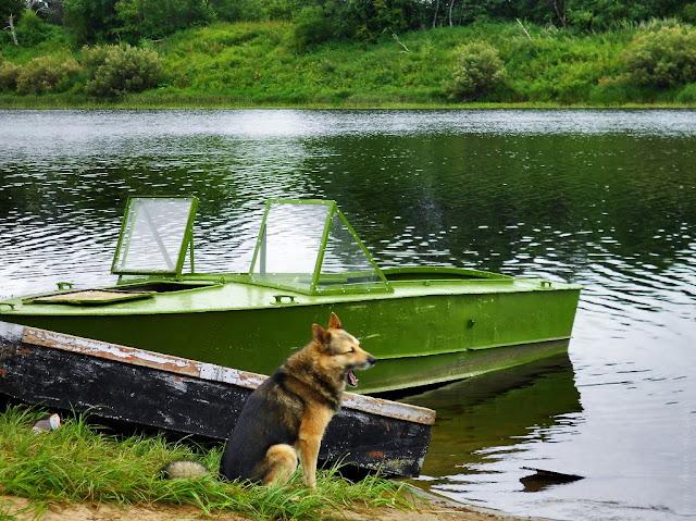 Вологодская область, река Кубена