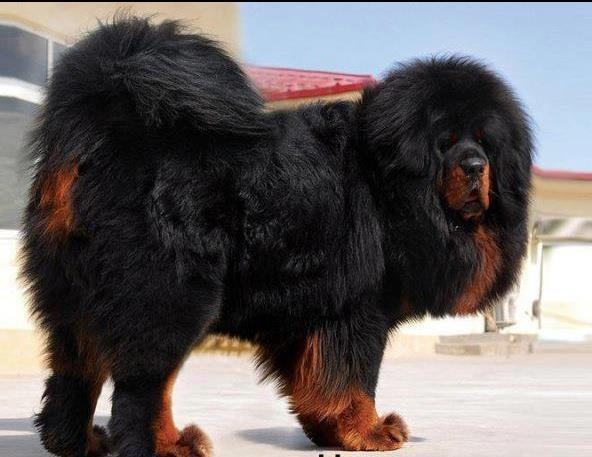 Nepali dog names