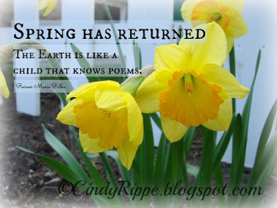 Spring has Returned quote by Rainer Maria Rilke, Daffodils by the fence, Florals-Family-Faith, Cindy Rippe