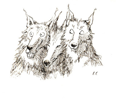 croquis sketches loups wolf illustration