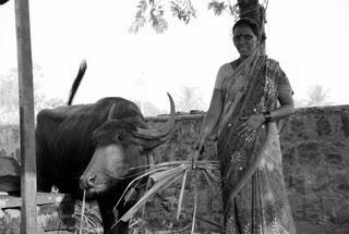 Sumitra Kamble and Group