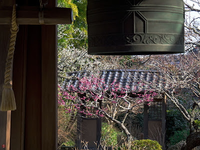 Red ume blossoms: Kaizo-ji