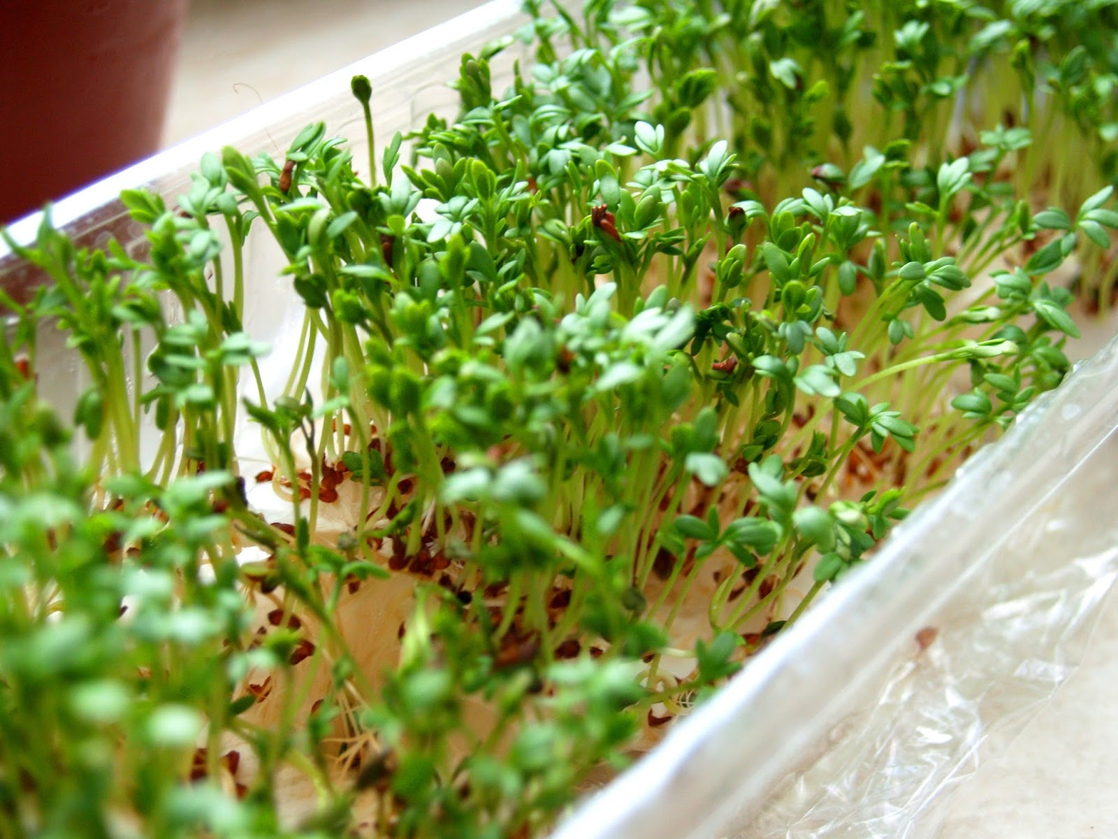 Gourmet Balance: from home-made to Gourmet: How to grow