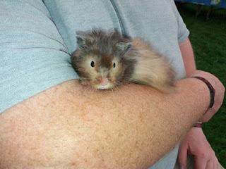 hamster teddy bear