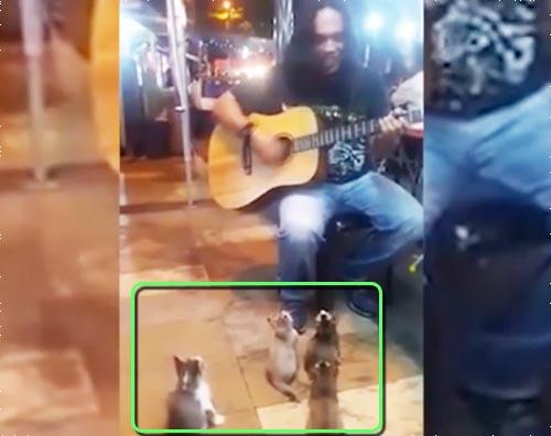 kittens listen to malaysian busker