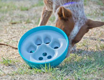 Puzzle bowl for problem solving dogs
