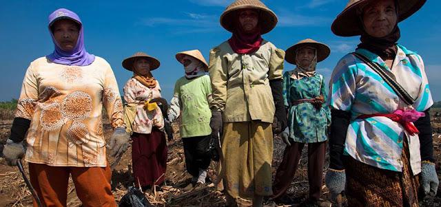Petani Tebu Kecewa Pemerintah Impor Gula Saat Stok Melimpah