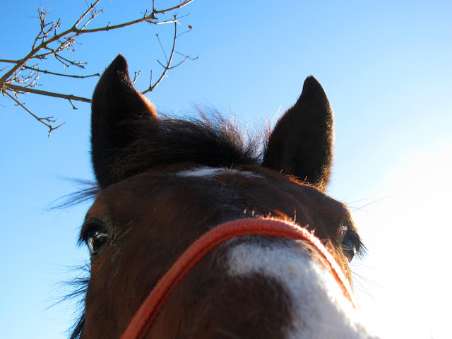 Horse-Close-Up-Winter-2010