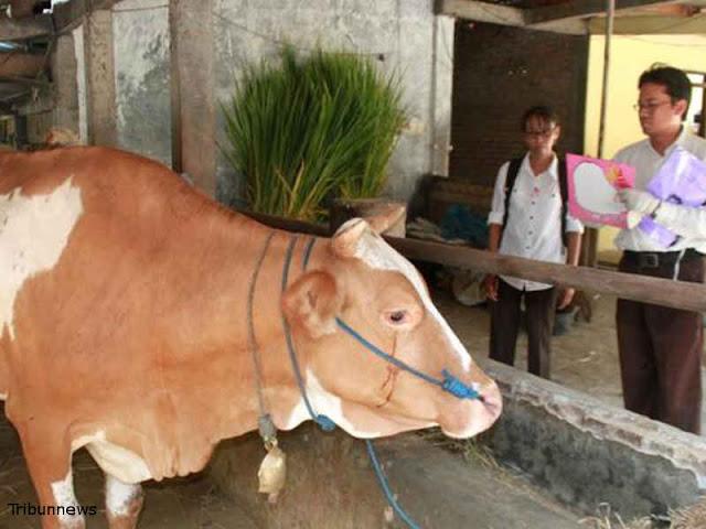 Peternak Kabupaten Malang Raup Keuntungan dari Inseminasi Buatan