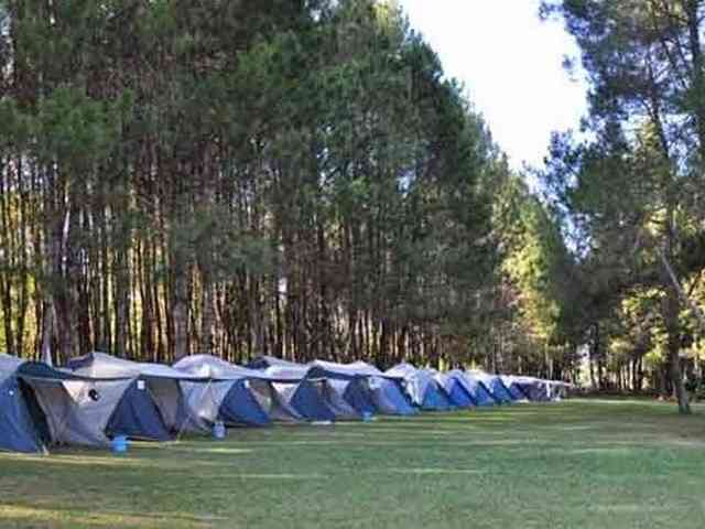 Pine Forest Camp