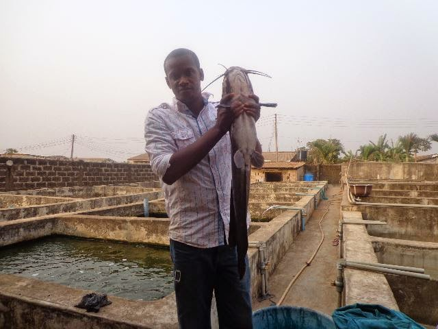 how to start catfish farming business in plastic fish tanks and rh goodbooksafrica com Crawfish Farming in Tanks Small-Scale Fish Farming