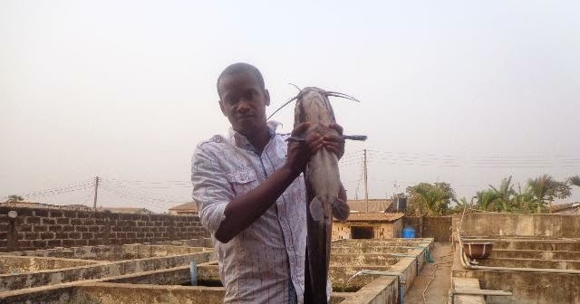 How to start catfish farming business in plastic fish for How to start a fish farm